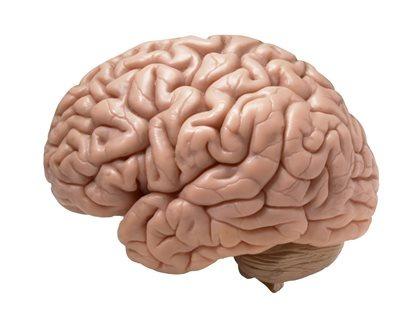 brainhuman