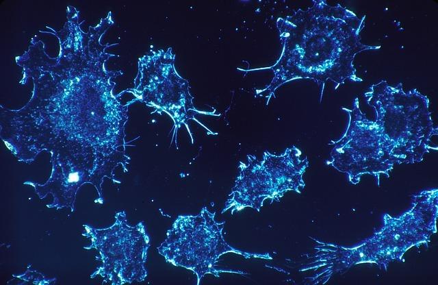 cancer-cells-541954_640 (2)
